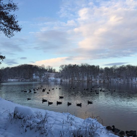 Everything was still life except me...I was out for a run. Running Dawn Sunrise Trail Running Large Group Of Animals Animal Themes Animals In The Wild Sky Nature Bird Lake Water Beauty In Nature Cloud - Sky Animal Wildlife Duck Cold Temperature Winter Outdoors