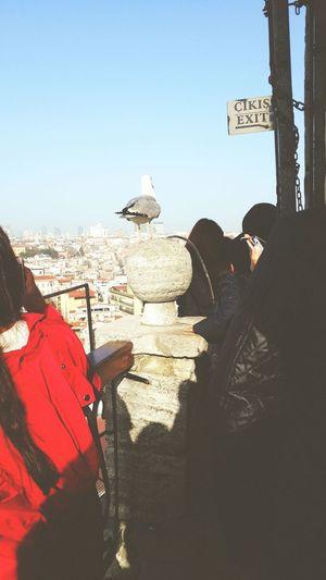 Galatatower Galatakulesi Gull View Istanbul Turkey Bird