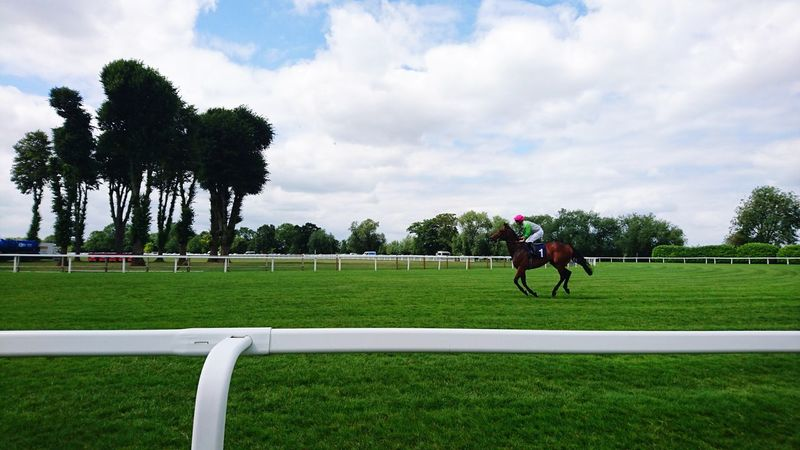Horse Racing at Windsor Racecourse Jockey Horse Competition Horseback Riding Sport Horse Racing Sports Race Cloud - Sky Running Riding Sports Track Grass Sports Uniform Windsor Race Day Tree Domestic Animals Competitive Sport People Mammal Adult Sports Clothing
