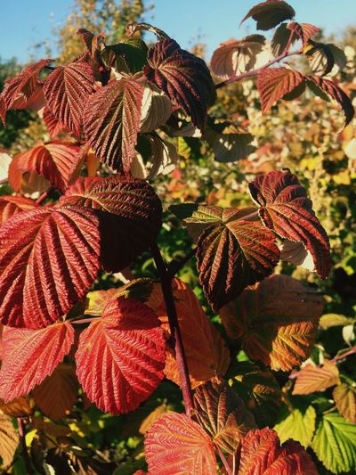 Close-up of leaves during autumn