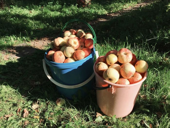 Various fruits in container on field
