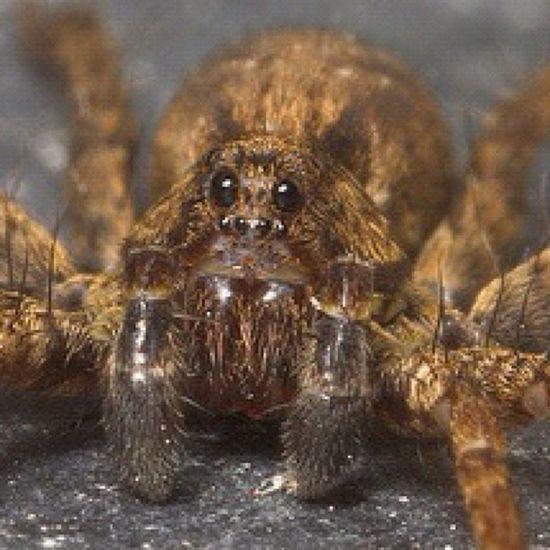 Booooooo Spider Macro Bug Arachnid Improvedimage