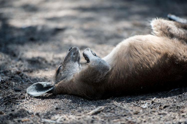 Mammal sleeping while lying on land