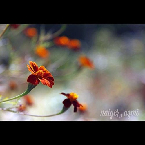 Flower Photoshoot Photography Phoolpur uttarpradesh azamgarh azmi streetphotography desi delhi india indian