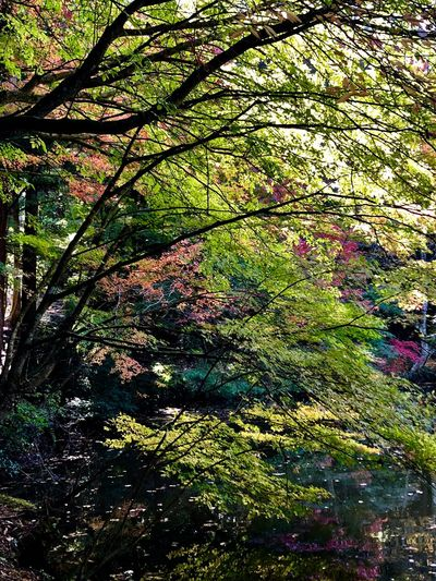 A Forestry Scene in Early November. (181110-181205) Full Frame Plant Backgrounds No People Beauty In Nature Growth Nature Land Tree Grass Green Color Multi Colored Pattern Shadow Sunlight Tranquility Day Outdoors High Angle View