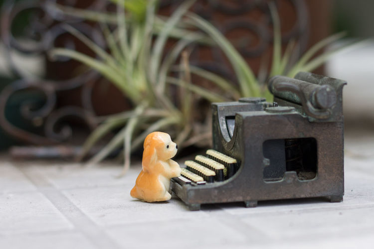 Toy dog with typewriter on floor at porch