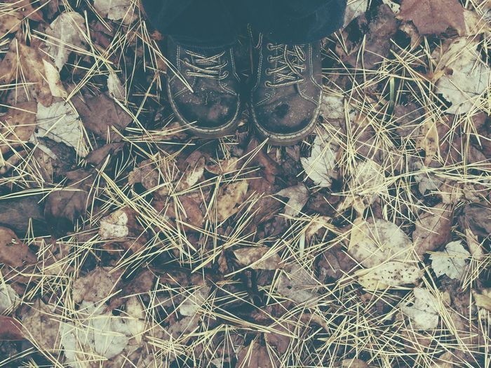Autumn Walk Autumn Fall Shoes Boots Hiking