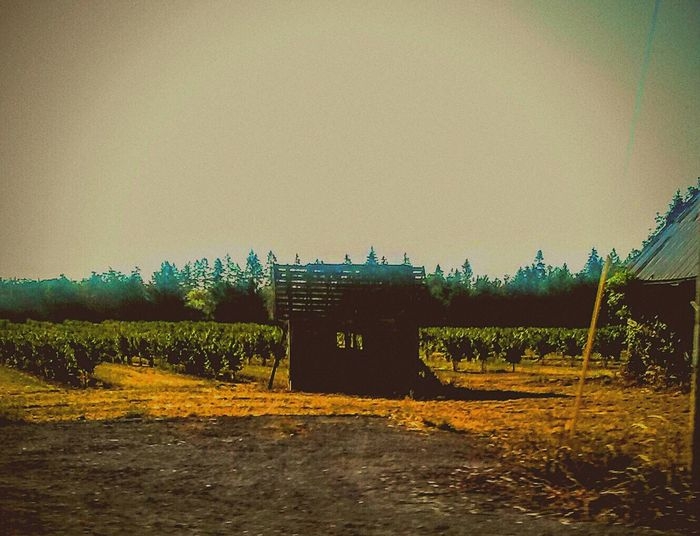Lost In Time Small Barn Old Barns Little Cabin In The Woods In The Vineyard Grapes 🍇 Growing Making Wine Hanging Out Taking Photos Check This Out Drivebyphotography Farm Life Barnstalker Winolife I❤oregon My Daily View Relaxing Enjoying Life Oregonphotographer Willamette Valley Eyeemphotography Oregonexplored Lost In The Moment Magical Atmosphere