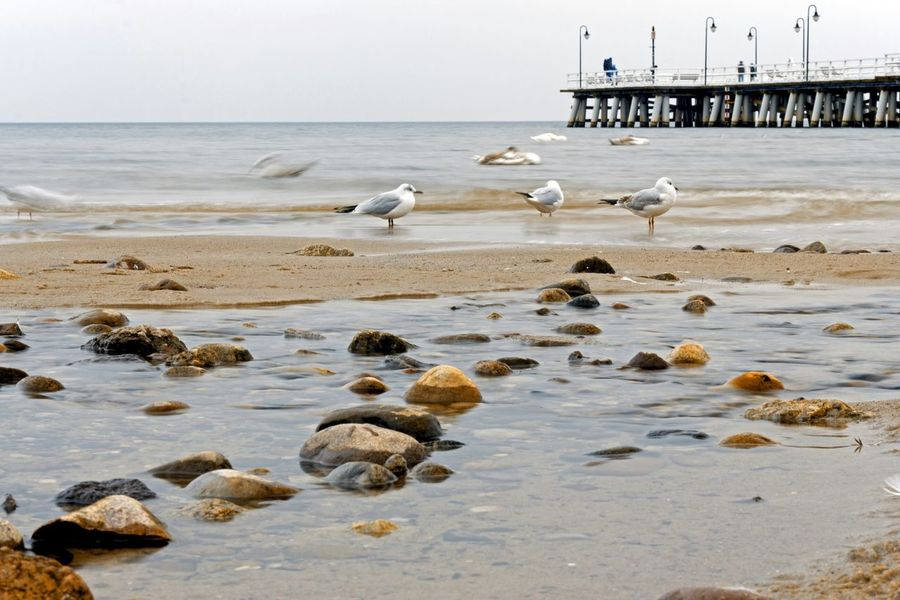 Nature Sea Eyem Best Shots Seagulls Baltic Sea Pier Landscape