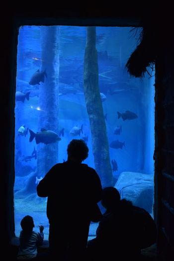Rear view of silhouette people looking at aquarium