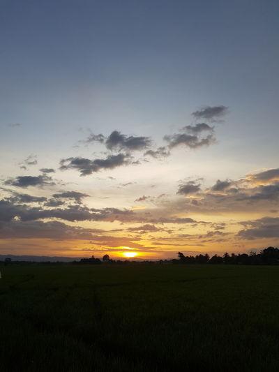 sunset 2 Tree