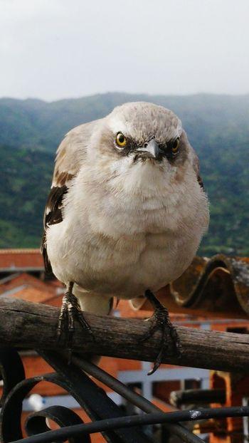 Bird Nature AngryBird