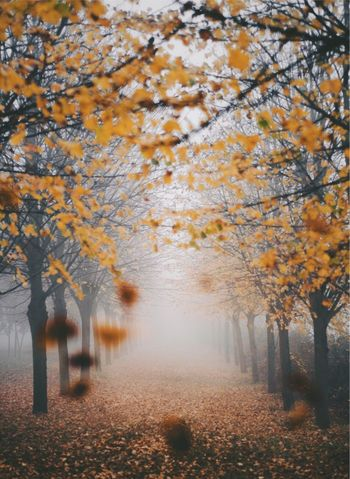 Change Autumn Leaf Tree Nature Scenics Beauty In Nature Tranquility Tranquil Scene Fog Landscape Outdoors The Way Forward Branch Yellow No People Day Growth Maple
