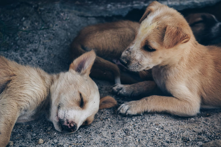 Two dogs resting