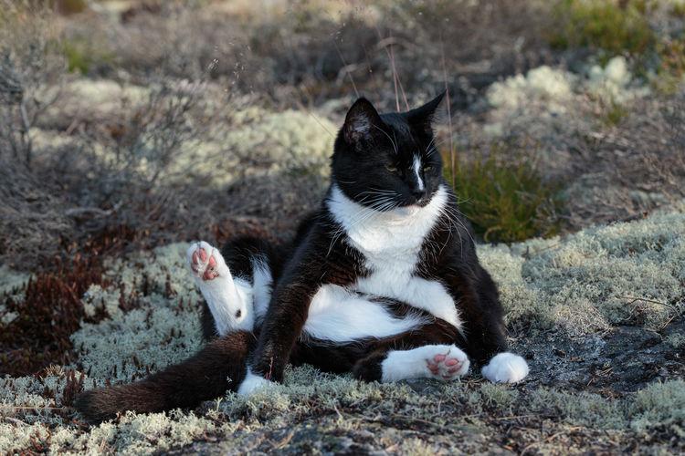 A bored cat sitting in moss