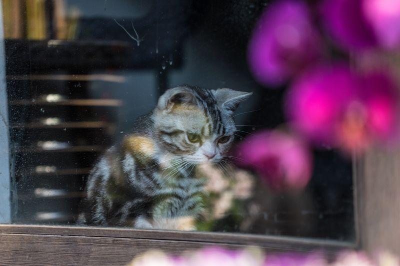 Cat looking through glass window