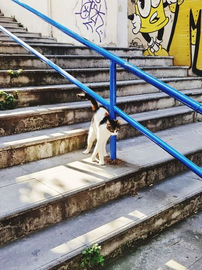 Dog sitting on staircase