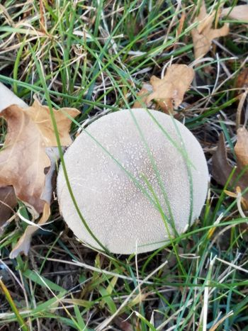 Grass Fungus Mushroom Close-up Outdoors No People Day Nature