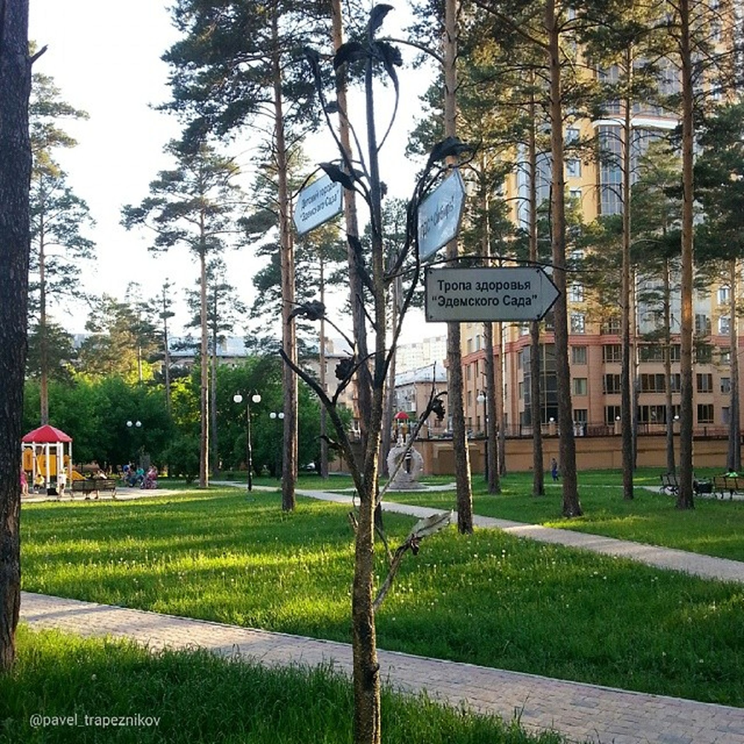 tree, grass, building exterior, transportation, tree trunk, built structure, bare tree, green color, architecture, growth, text, communication, road sign, western script, field, branch, day, clear sky, sky, lawn