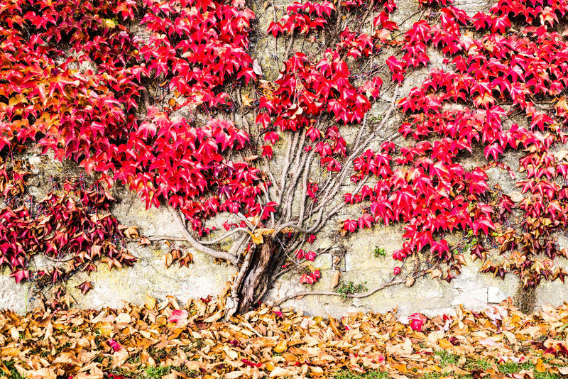 Fine Art Photography Wall Autumn Beauty In Nature Change Close-up Day Flower Fragility Growth Leaf Nature No People Outdoors Plant Red Scenics