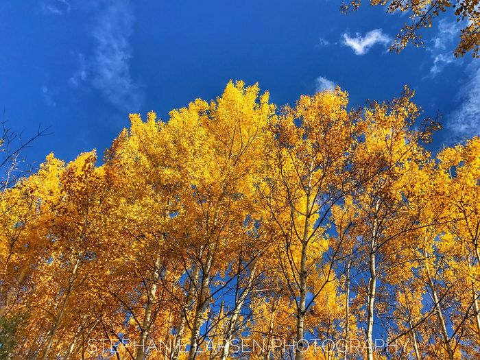Beautifully Organized Tree Low Angle View Growth Nature Sky Beauty In Nature No People Outdoors Branch Yellow Autumn Day Slarsenphotography