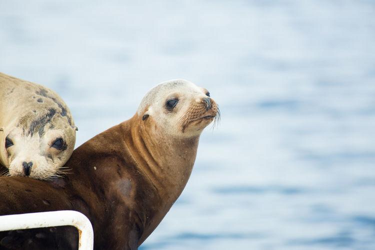 Close-up of seals against sea