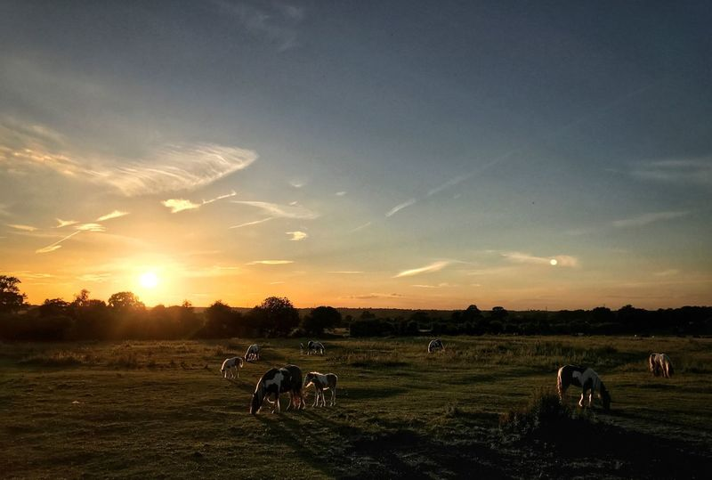 The horses came to play Sunset Field Landscape Nature Beauty In Nature Horses Summer