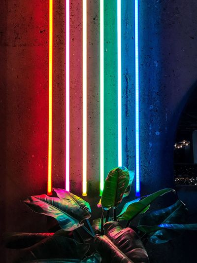 Multi Colored Illuminated Indoors  No People Night Neon Light Noen Light Lights Plant Nature Luminous Luminarie Colors Colorful Collored Noen Color Multy Color
