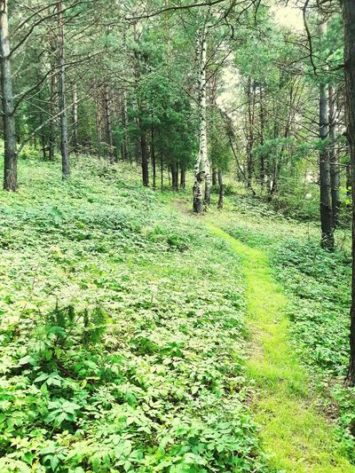 Forestwalk Mountain