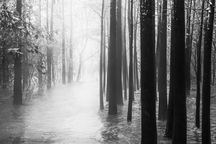 Misty land 02 B&w Beauty In Nature Black And White China Fine Art Photography Fog Foggy Forest Forest Photography Hefei Lake Landscape Misty Mood Moody Sky Mysterious Nature Nature Scenics Tranquil Scene Tranquility Tree Water Winter WoodLand