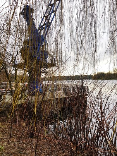 Bare Tree Nature Tree Tranquility Tranquil Scene Winter Outdoors Branch Scenics Water Lake Day Cold Temperature