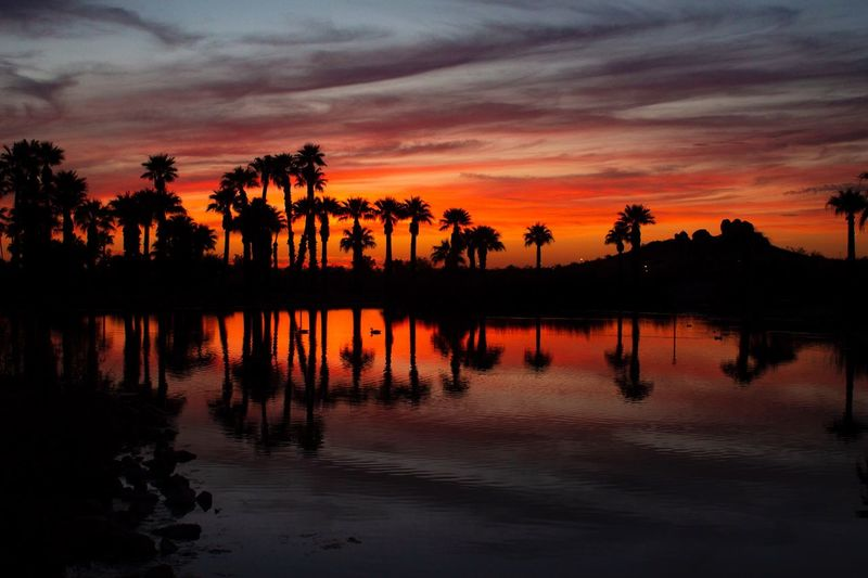 Sunset Palm Tree Adventure Exploring Travel Travel Destinations Meditation Sunset Sky Tree Orange Color Plant Water Silhouette Beauty In Nature Scenics - Nature Reflection Tranquility Tranquil Scene Nature Cloud - Sky Lake Idyllic No People Outdoors Summer Exploratorium Visual Creativity