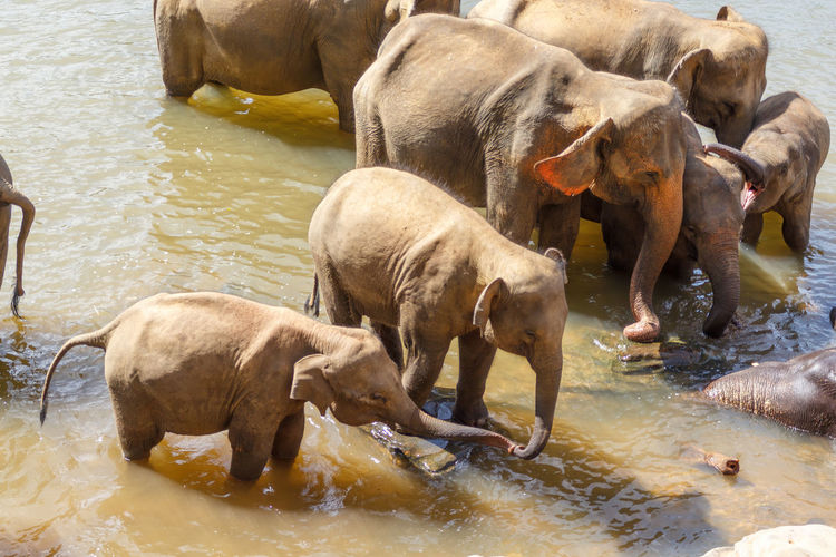 Elephant drinking water in lake