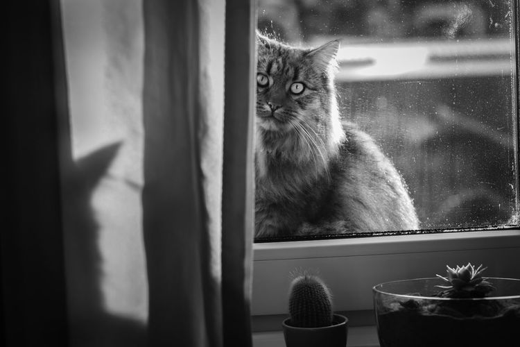 Close-up of cat looking through window at home