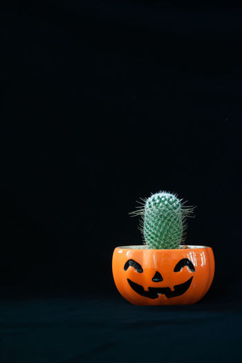 Close-up of pumpkin on table against black background