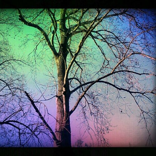 Dreamy♡ Tree Colorphotography