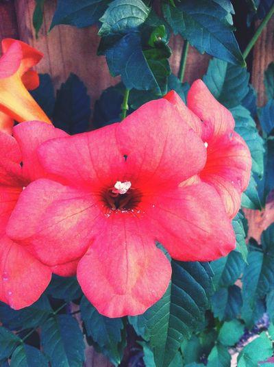 cliche flower picture