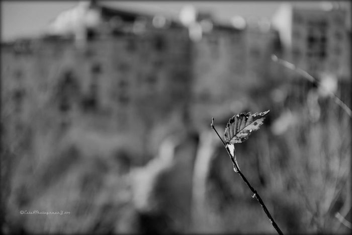 Soledad Loneliness Black And White Leaves_collection Españoles Y Sus Fotos Winter Trees EyeEm Nature Lover