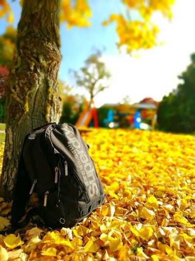 The golden fall is coming. In this time of the year I love being outside with my cam and my backpack :) This photo was taken on a lovely and sunny day in octobre. I hope you like it! First Eyeem Photo Fall Beauty Stuttgart Colorful HuaweiP9 Herbstspaziergang Herbst Playground Spielplatz Autumn Colors Autumn🍁🍁🍁 Superdry Backpack Beautifully Organized Embrace Urban Life My Year My View Finding New Frontiers Adapted To The City Lieblingsteil Miles Away Eyeem0711 The Secret Spaces The Street Photographer - 2017 EyeEm Awards The Great Outdoors - 2017 EyeEm Awards Neighborhood Map Breathing Space EyeEmNewHere Investing In Quality Of Life The Week On EyeEm Your Ticket To Europe Your Ticket To Europe Paint The Town Yellow Colour Your Horizn