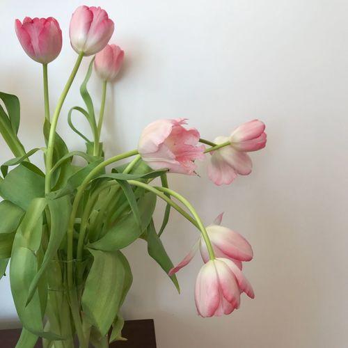 Tulips EyeEm Selects Flower Petal Growth Nature Beauty In Nature Plant Tulip Spring