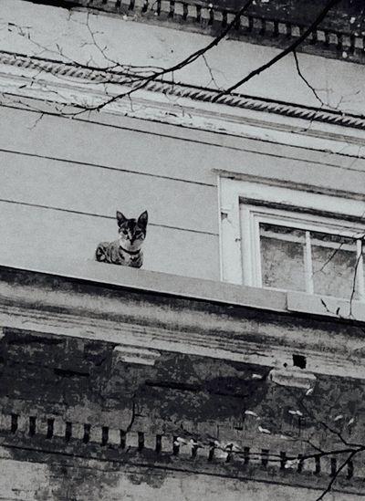Mammal Domestic Animals Domestic Cat Cat One Animal Pets Feline