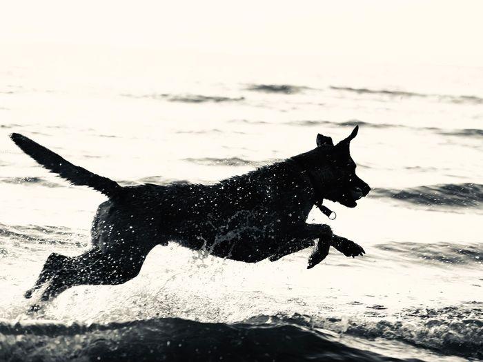 Water Animal Themes Animal Mammal Pets Domestic Animals Domestic Dog Splashing Nature No People Motion Beach