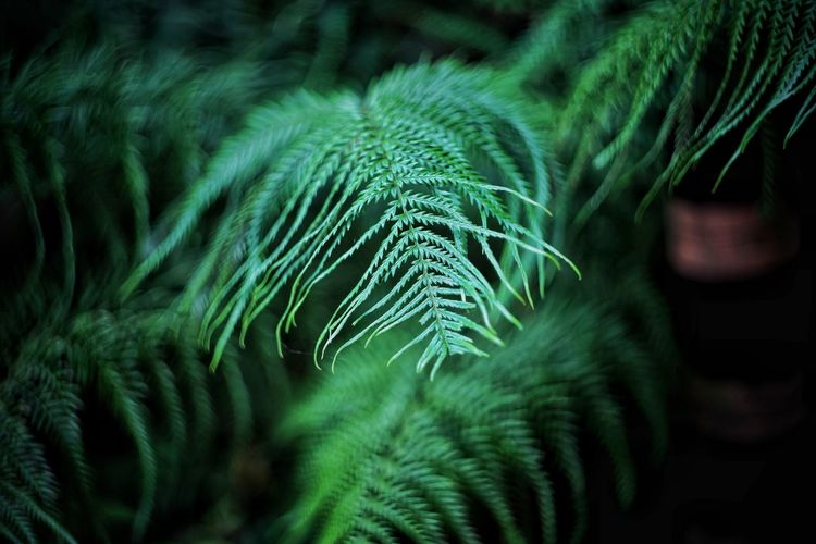 Green Nature Softness Close-up No People Green Color Beauty In Nature Fragility Day Outdoors