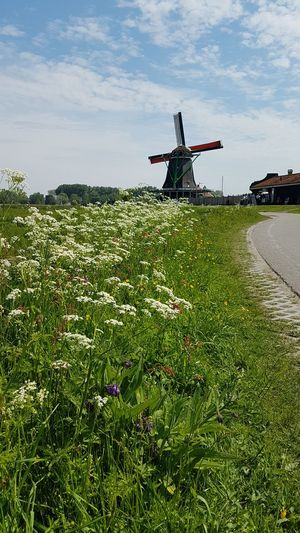Molina Flowers Flowering Plant Flowers,Plants & Garden Spring Speingtime Spring Flowers Molina Windmill Molen Beautiful Nature Travel Travelling Travel Photography Full Length Sky Grass Cloud - Sky Farmland