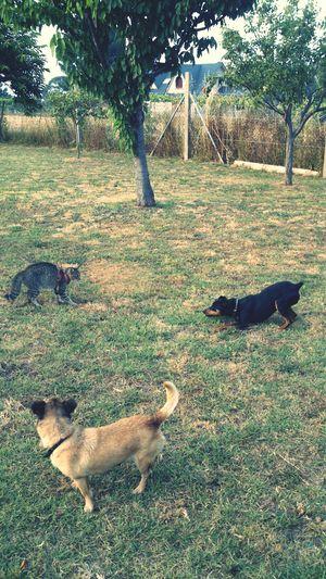 Cats Rosita Tras El Cristal Dogs
