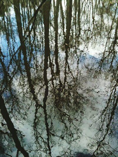 Cypress Swamp, Natchez Trace