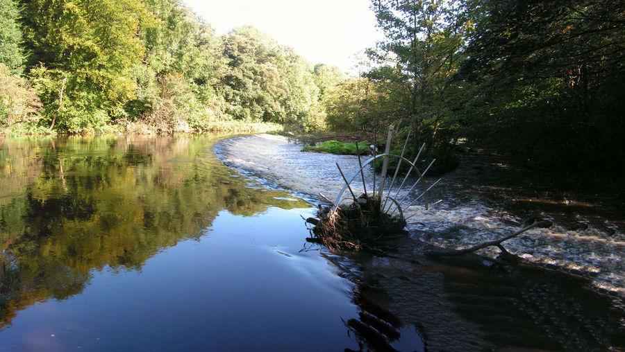 River Almond at