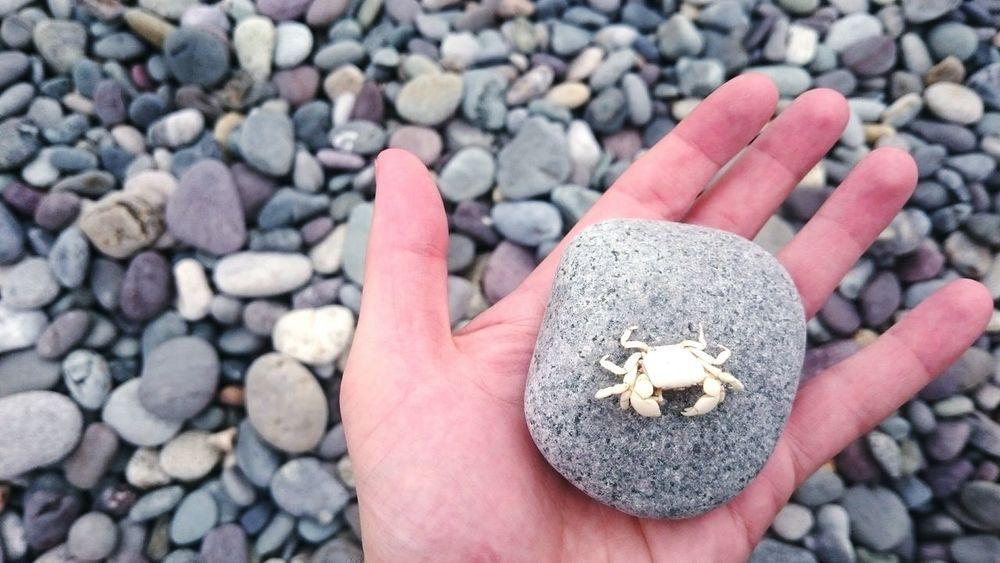 Tiny crab skeleton on a rock found on the beach at Lima, Peru. Sea Life Ocean Life Animal Skeleton Animal Death Crab Beach Focus On Foreground Coastline Peru Beach Focus Object