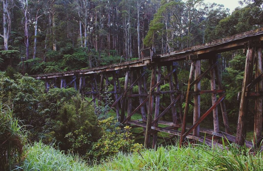 EyeEmNewHere Bridge - Man Made Structure Tree Built Structure Growth Outdoors Nature Day Low Angle View No People Plant Water DandenongRanges Yarravalley Yarra Valley Melbournephotos Beauty In Nature MelbournePhotographer Melbourne Rocks Photography Winter 2017 Nature Visityarravalley Dandenong Ranges