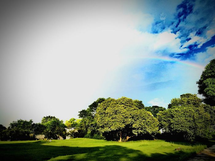 Tree Beauty In Nature Green Color Nature Outdoors Sky Day No People Cloud - Sky Grass Thai Life Lopburi Thailand Lopburi Rainbow🌈 Rainbow Sky Rainbow Nature Tree
